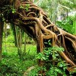 South Asia Tropical Botanical Garden of Zhanjiang