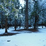 April Snow - Upper Pines Campground