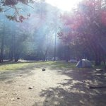 Morning sun shining through Upper Pines Campground
