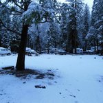 Surprise Snow - April Upper Pines Campground