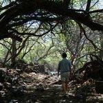 Hoapili trail South - near Kihei