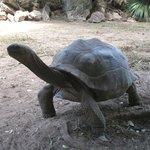 Il parco delle tartarughe