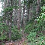 Cot Trail