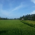 Beautiful rice field and day