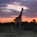 A dawn like this could only be seen in Africa