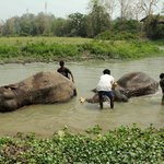 ...and you can bath an elephant here