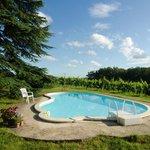 Lekker luieren bij het zwembad met uitzicht op de wijngaard!