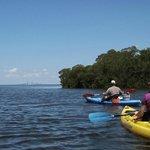 Kayaking in the mangoves