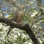 A Dove in Dogwood on 2nd Street-Historic District
