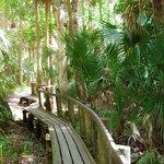 We loved this boardwalk