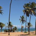 entrada a la playa y sus palmeras
