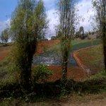 Constanza Landscape