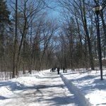 Le Parc du Bois-de-Coulonge, Mars 2013