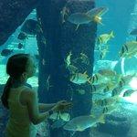 Aquarium in Royal Towers lobby