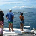 Whale watching from the catamaran sailboat in the Pearl islands