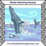 Whale Watching Panama Logo