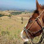 Smiling Horses in Costa Rica