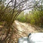 """""""Off-Road"""" in Vieques Wildlife Refuge"""