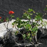 The beauty in the black lava sand