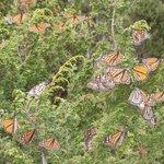 Centro Turistico Santuario de Mariposas