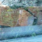 mur végétalisé sur cour