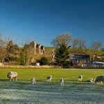 Sheep in front of Holmhead