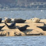 SEAL WATCH SAILING CHARTER / APRIL AND MAY