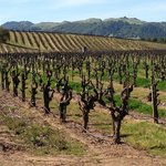 Sonoma - Cutrer Vineyards Inc