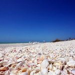 One of the best shelling beaches of the world!