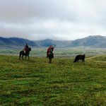Participate in a Cattle Round Up in the High Andes