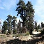 Big Bear Frontier Cabins & Hotel Foto