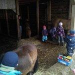 Poneys et chevaux de la ferme