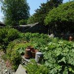 The garden at Hill Top Farm.