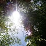 Beautiful bamboo patches and sun light