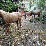 Martinez Horses