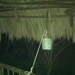 Treehouse freshwater bucket