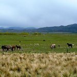 Wild horses on the Estancia