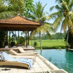 Pool area--salt water pool and rice fields view