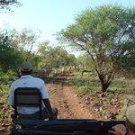 Great safari