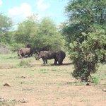 Favorite rhino
