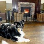 Millie enjoying the Fire.