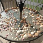 Lots of shells from the beach