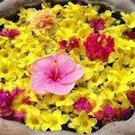 i fiori dell'isola