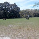 Wild Horses, Greyfield grounds