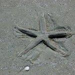 Starfish, Cumberland National Seashore