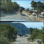 friendly horses on the road