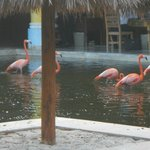Flamingos. They're pretty aren't they?