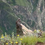 Sightseeing-turer