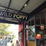 Foto de Wild Poppy