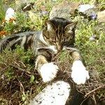 The gardeners helper Kitt